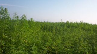510x285_industrialhemp-jpg-pagespeed-ce-hywtobvx1f
